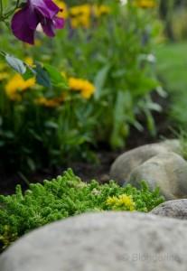 Gartenbeet gelb lila Bodendecker