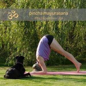 Vorbereitung Unterarmstand pincha mayurasana forearmstand preparation Yoga September Challenge Instagram Inversion Umkehrhaltungen Yogaposition Asana