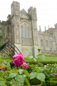 Mittelalterliches Schloss, Arundel, West Sussex, England, Castle, Garten, Ausflug, Urlaub, Kurztrip, Schloss, Rose
