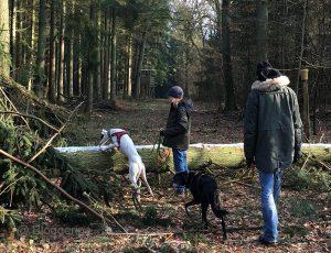 Pirata, Hund, Galgo espanol, Tierschutzhund, weißer Hund, Sichthund, spanischer Windhund