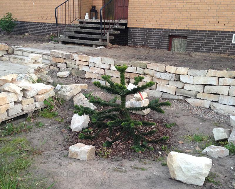 Vorgarten, Sandsteinmauer, Natursteinmauer, selber machen, Garten, Garten gestalten, Andentanne