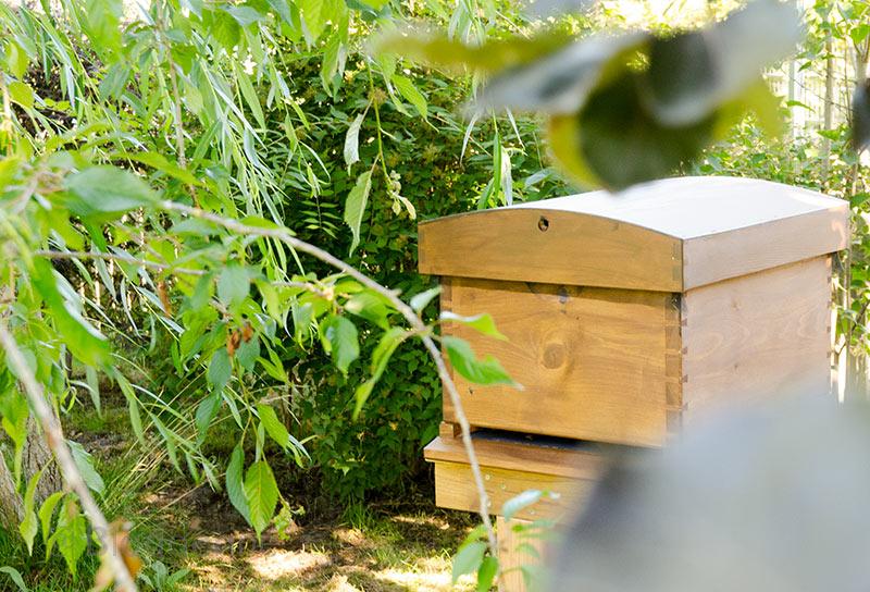 imkern, natürlich imkern, Bienen, Dadant, Beute, Bienenvolk, Pollencrew