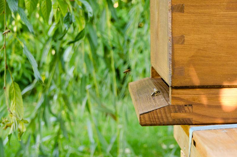 imkern, natürlich imkern, Bienen, Dadant, Beute, Bienenvolk, Pollencrew, Biene, Bienenkiste