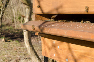 Bienen, Bienenhaltung, Hobbyimker, Frühling, Blüten, erster Flug, Bienenbeute