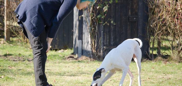 Pirata, Galgo Español, galgo espanol. Glaga, Windhund, Spanischer Windhund, weiß, Hund, Sichthund, Hasenjäger