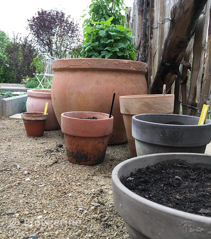 Garten, Gemüsegarten, Selbstversorger, Kräutergarten, Kräuter, Küchenkräuter, Minze, Dill, Basilikum