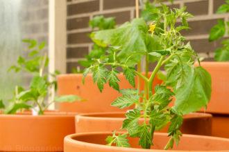 Tomatenhaus selber bauen, Selbstversorger, Tomate, Zucchini, Aubergine, Paprika, Pepperoni, Gewächshaus, diy, recycling