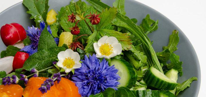 Garten, Gemüsegarten, Selbstversorger, Salat, Kräuter, Salbei, Spitzwegerich, Lavendel, Kornblume, Majoran, Zitronenmelisse, Walderdbeere, Erdbeere, essbar, Blüten, Blätter, Küchenkräuter, Heilpflanzen