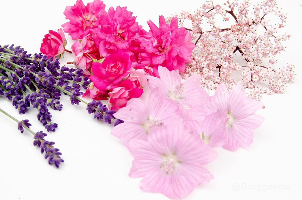 Tee, Kräutertee, essbare Blüten, Lavendel, Rose, Malve, schwarzer Holunder, rosa, lila, Herznote