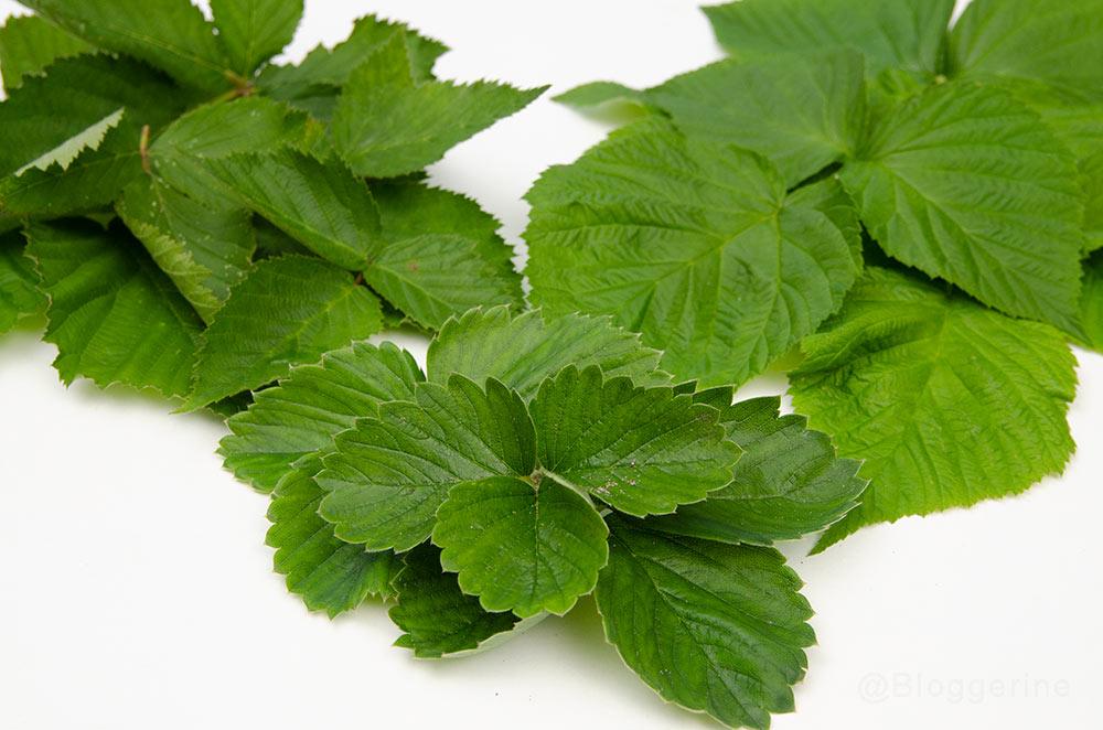 Tee, diy, Kräutertee, Beerenblätter, Brombeere, Himbeere, Erdbeere, Tee selber machen