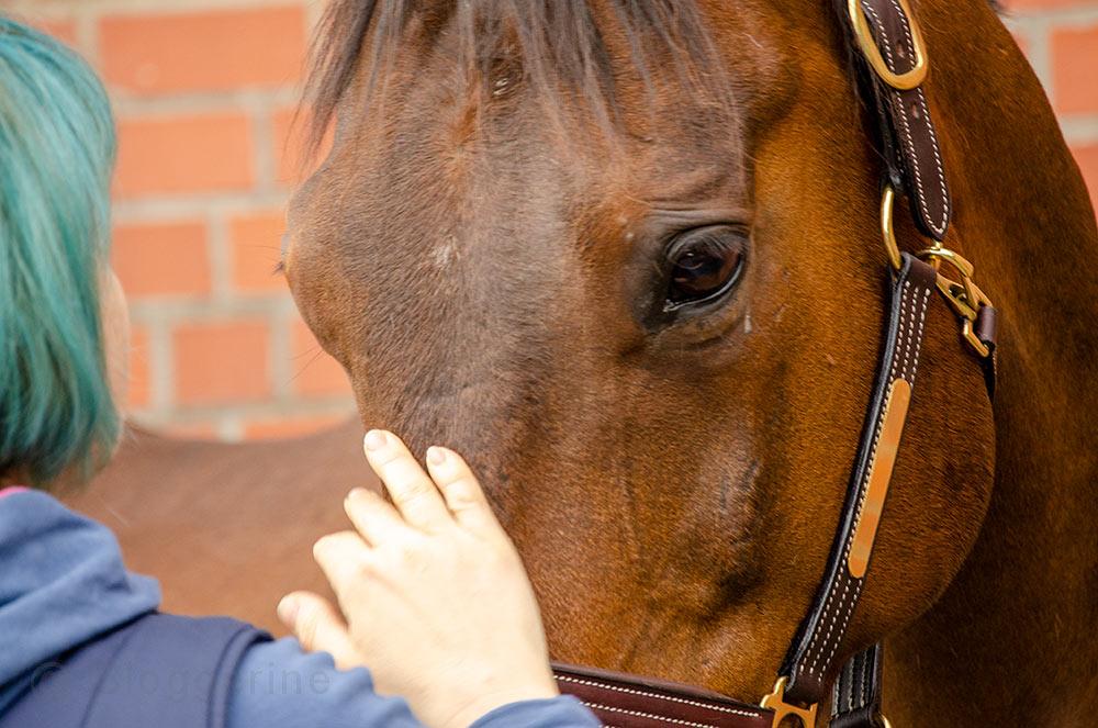 Reiter, reiten, reiten lernen, Reitunterricht, Reitbeteiligung, Wallach, Pferd, Reitplatz, Sir Philip