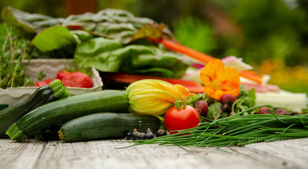 Gemüsegarten, Gemüse, Fruchfolge, Selbstversorger, Zucchini, Schnittlauch, Mangold, Tomate, Erdbeeren, Thymian, Kapuzinerkresse