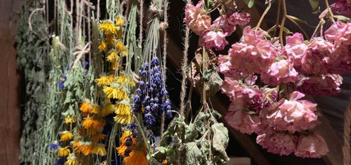 Heilkräuter, Kräuter, trocknen, Teekräuter, Kräutertee, Brennessel, Ringelblume, Rose, Kornblume, Blätter, trocknen, diy