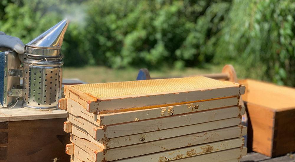 Hobbyimker, imkern, Bienen, Bienenvolk, Waben, Smoker, Rähmchen, Bienenbeute, Selbstversorger
