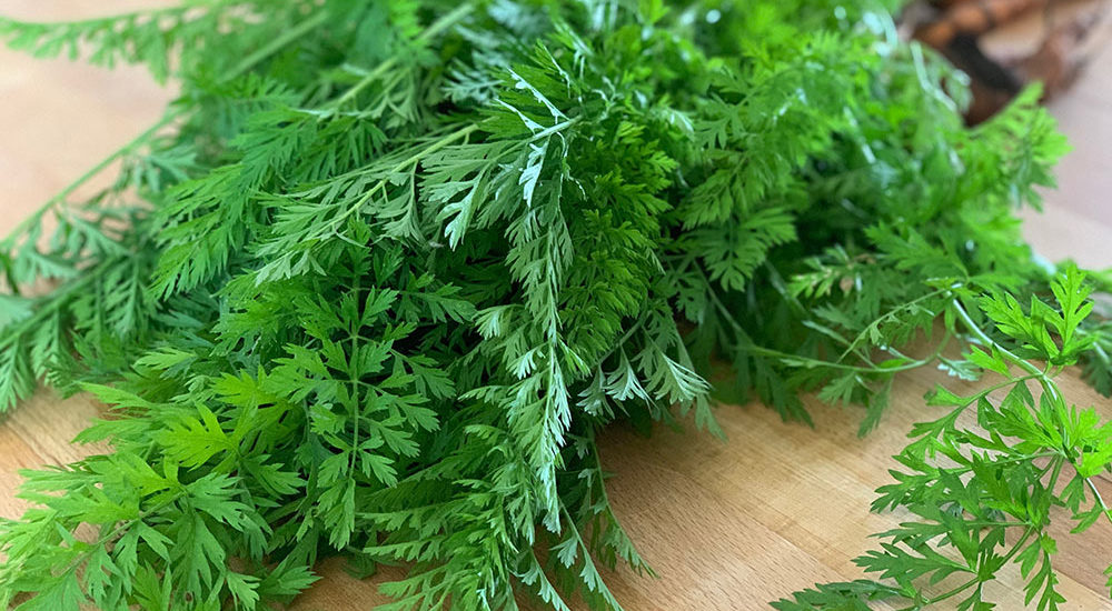 Karotte, Möhre, Mohrrübe, Möhrenkraut, Karottenkraut, verwenden, zubereiten, Rezept, Nudelrezept, Pesto, vegetarisch, kochen, Gemüsegarten, Selbstversorger, Wurzelgemüse