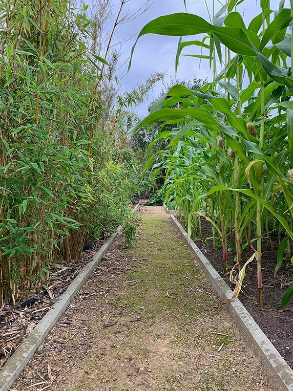 Gemüsegarten, Garten, Gartenweg, Wegedecke, naturnah, selber machen, diy, Mais, Bambus, Bantam