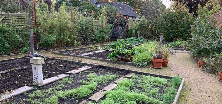 Gemüse, Gemüsegarten, Garten, Beet, Gemüsebeet, Herbst, auf den Winter vorbreiten, Selbstversorger