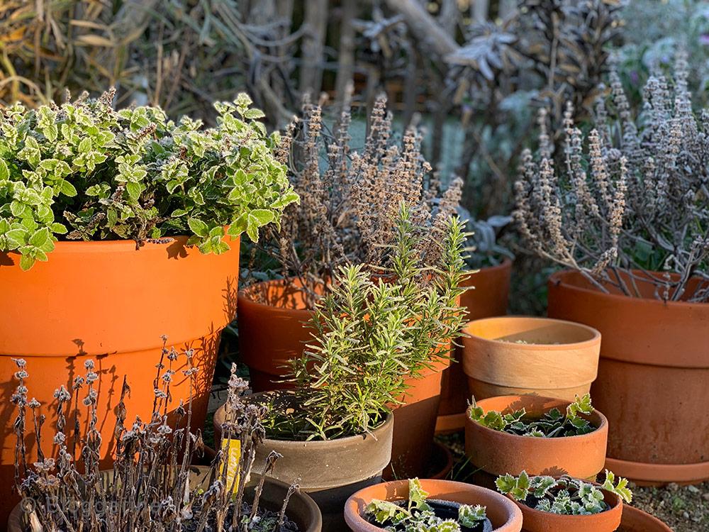 Garten, Gemüsegarten, Garten im Oktober, Gemüsegarten im Oktober, Raureif, erster Frost, Kräuter, Töpfe
