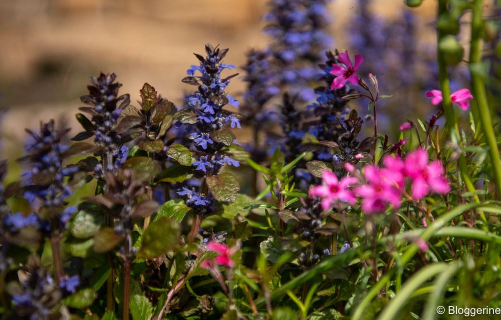 Blüten in lila und pink