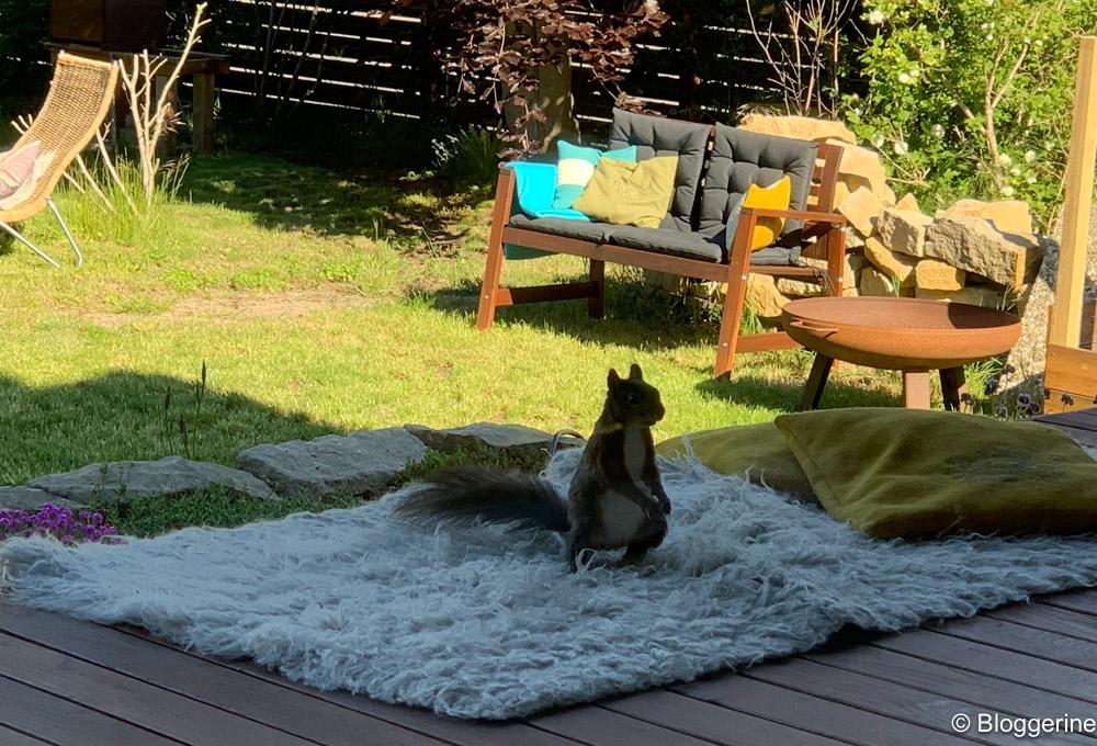 Eichhörnchen auf Flokati