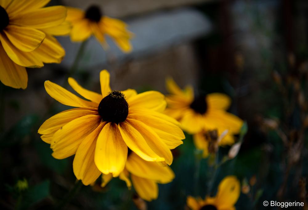 große gelb braune Blüte