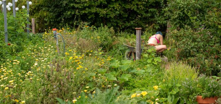 Gemüsegarten nach Wochen ohne Pflege
