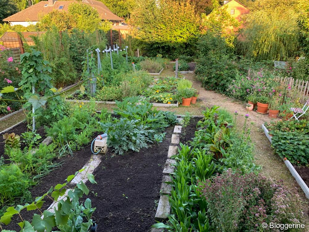 gepflegter Gemüsegarten im August