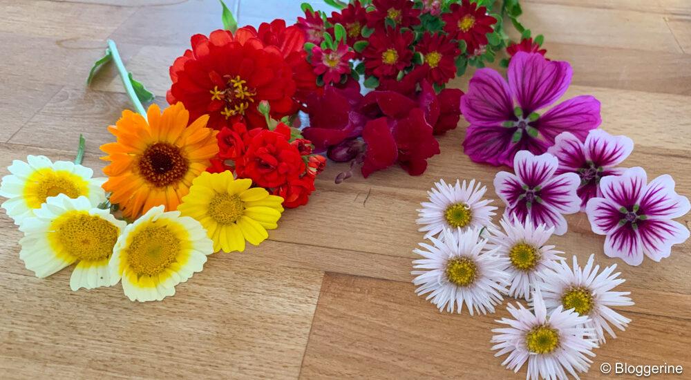 gelbe, orange und rote Blüten