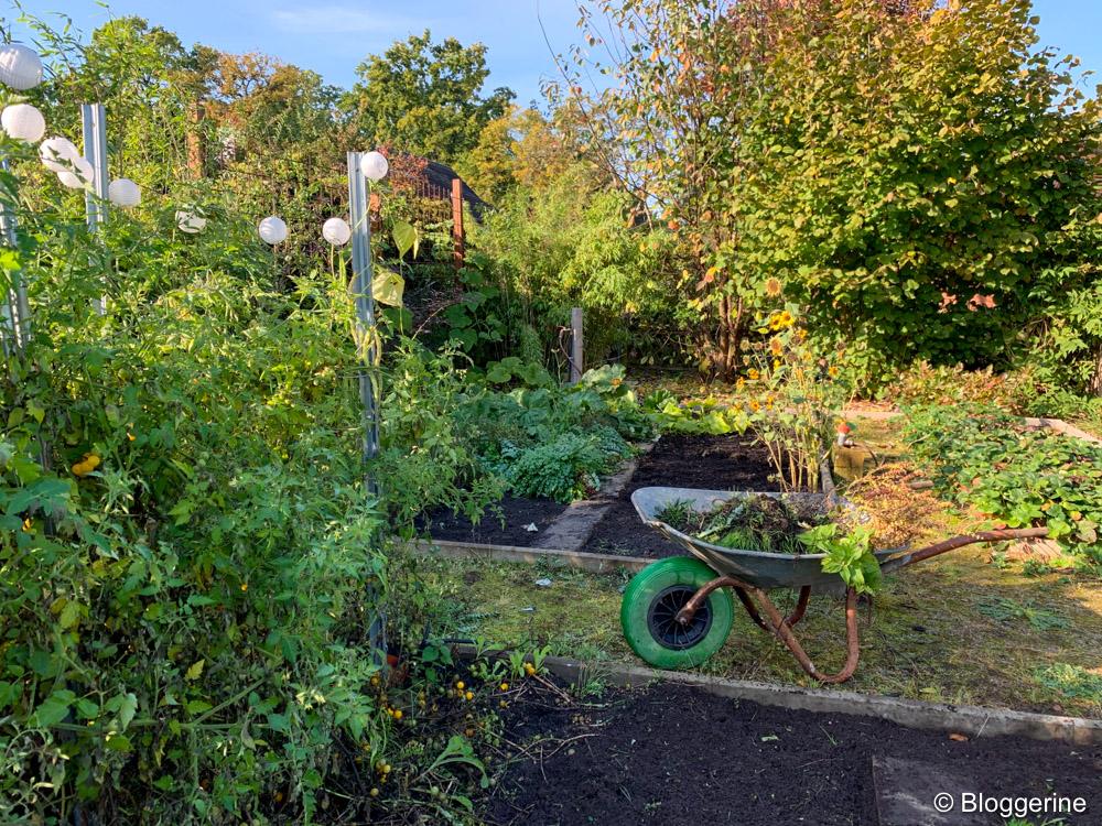 Gemüsebeete im Herbst mit Schubkarre