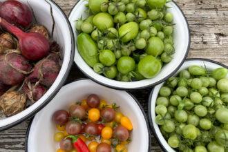 grüne und reife Tomaten, Zwiebeln
