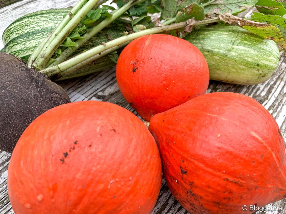 Kürbis, Rettich und Zucchini