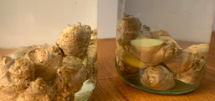 Ingwerstücke im Wasserglas