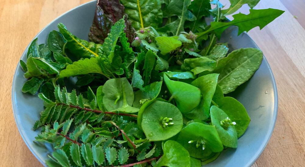 Grüner Salat mit vielen grünen Zutaten